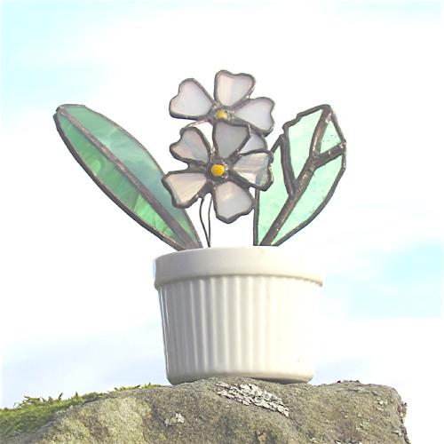 white primrose